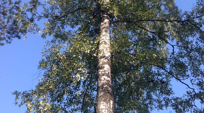 Vi följer ett träd