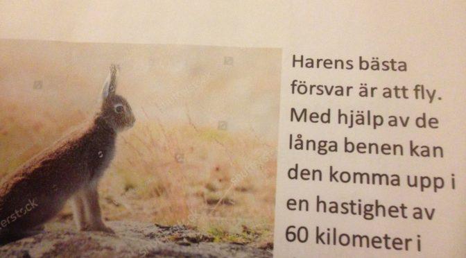 Klassens bok om däggdjur i skogen-den beskrivande genren