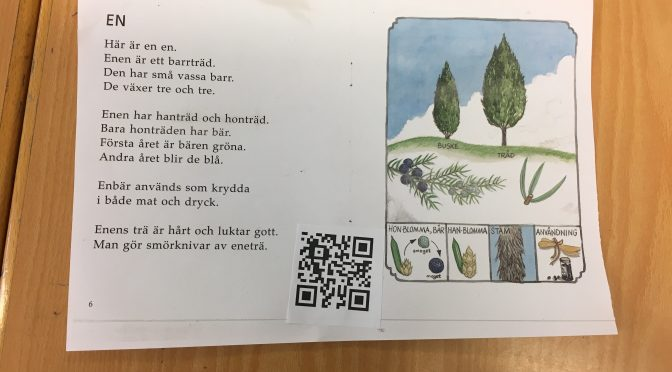 Korsspråkande kring barrträd